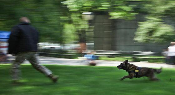 Επίθεση σκύλου