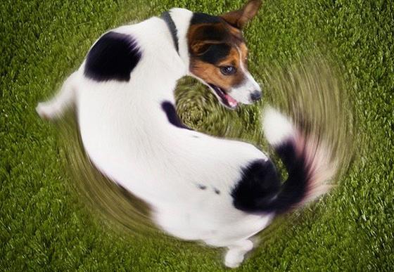Εμμονές σκύλου